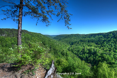 Collins Gulf Overlook in April, Savage Gulf State Natural Area, Tennessee