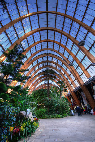 Sheffield-Winter-Gardens-Millennium-Gallery-Vitral-Rooflights-Internal-Towards-Crucible-Theatre-HDR-3