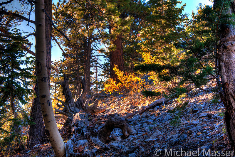 Mount-Charleston-Nevada-HDR-10