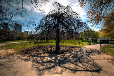The-Public-Garden-Boston-Massachusetts-HDR-12