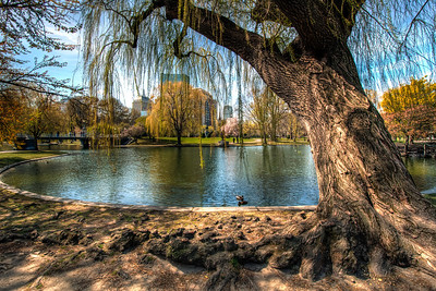 The-Public-Garden-Boston-Common-Boston-Massachusetts-HDR-13