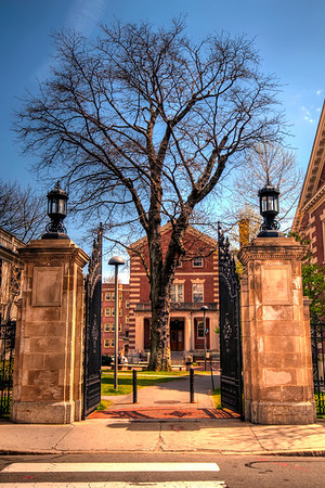 The-Lonely-Tree-Harvard-University-Massachusetts-HDR-10