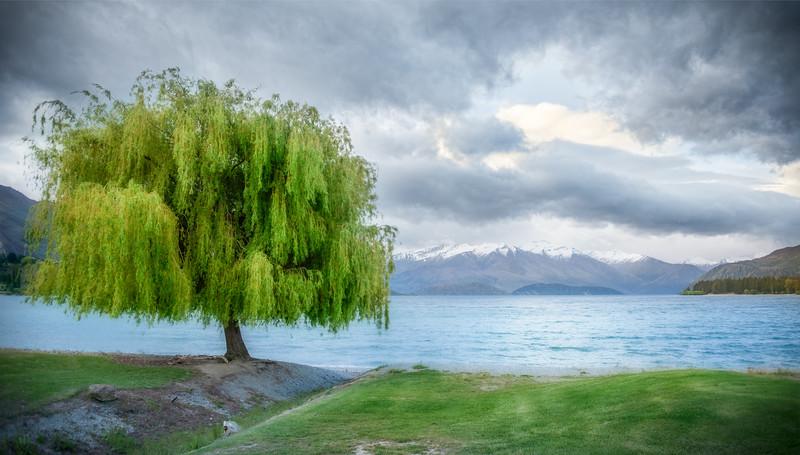 A Tree in Wanaka but not the tree