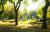 Magic at Kerepesi Cemetery
