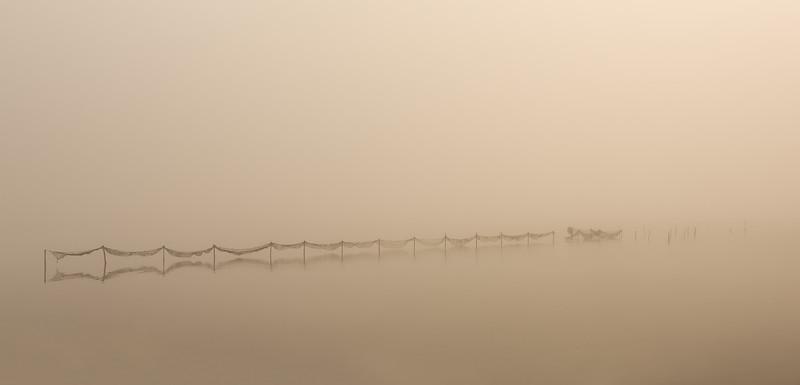 Misty fish net