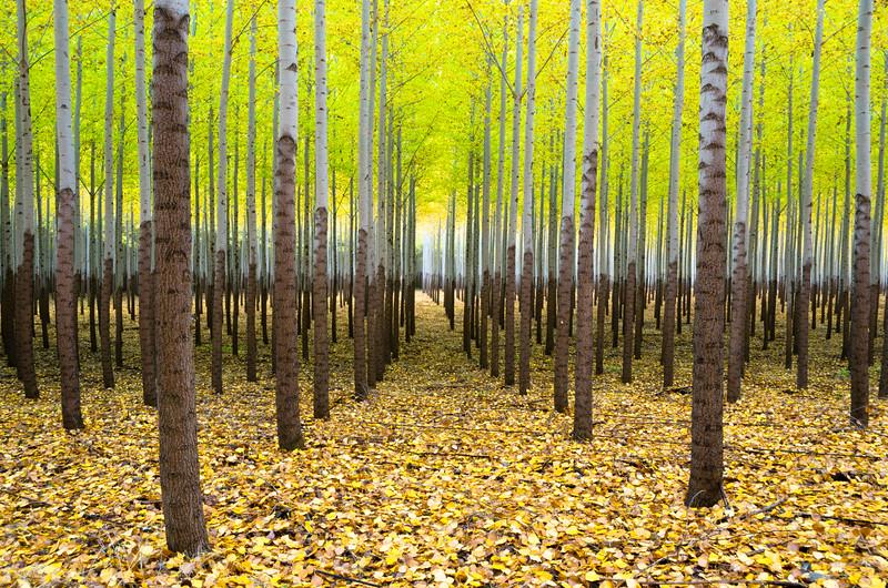 11x14_trees