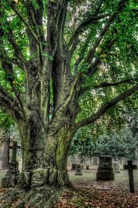 Hold Me Close Lone Fir Cemetery