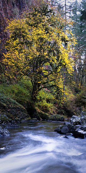 20091101-Abiqua Creek Panorama 1-2