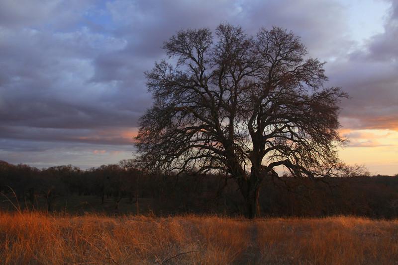sunset Folsom , Ca