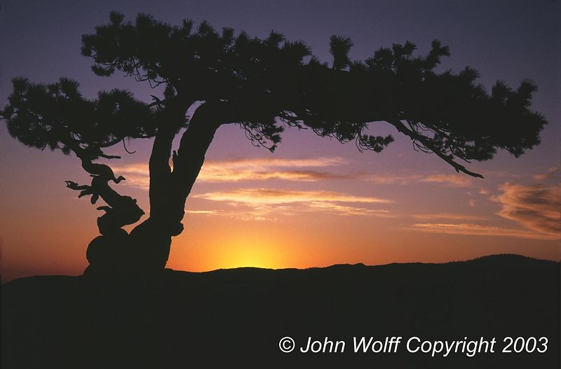 <b> Jeffrey Pine on Sentinal Dome at Sunset </b>