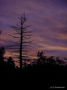 Dawn - Nashua, N.H.