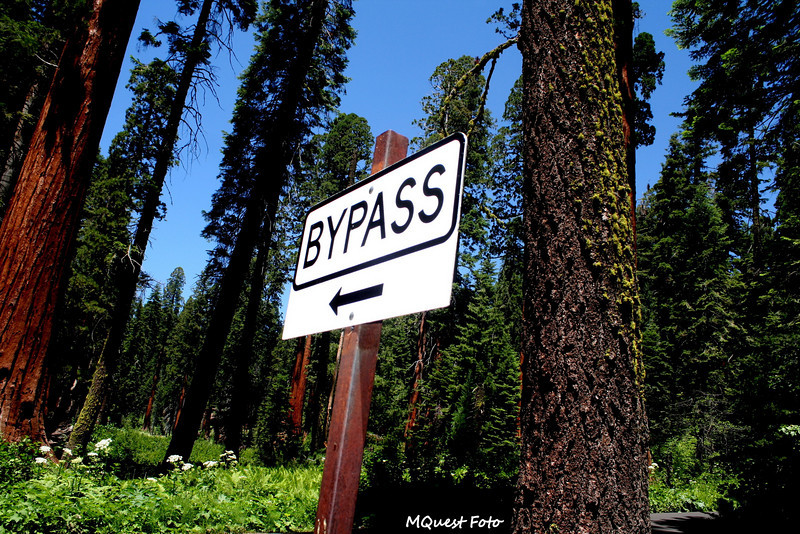 Bypass Sign in Sequoia National Park