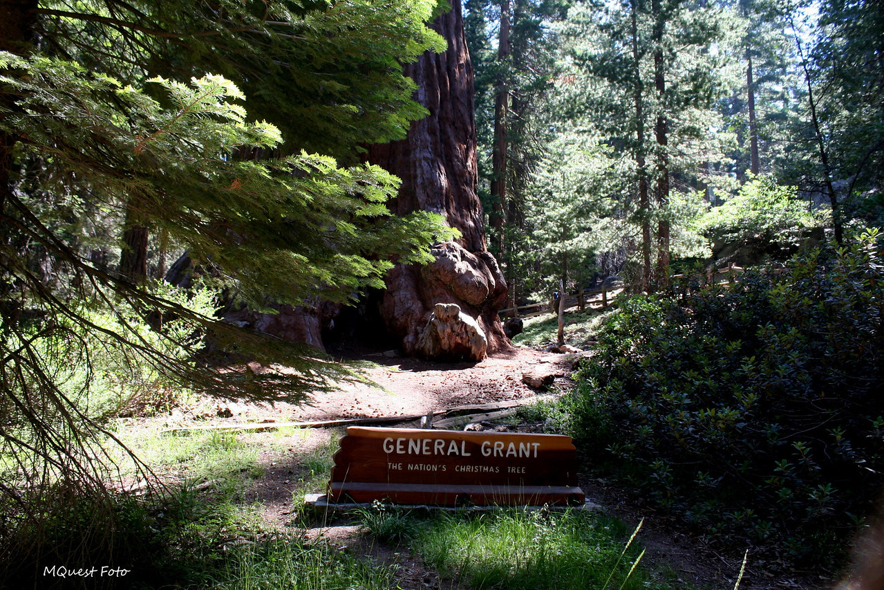 General Grant - The Nations Christmas Tree