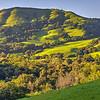 Sunset-East-Bay-Hills-Spring-Sunol-County-Park-Oak-Trees-Blue-Skies-rolling-hills-trees-grasses_D813941