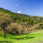 Rancho-San-Antonio-Los-Altos-Cupertino-Foothills-Spring-Green-lush-Trees-Northern-California_D816620