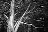 tree-dobsonville-cemetery-vernon-connecticut-0010918
