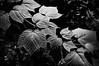 light-on-leaves-1310628