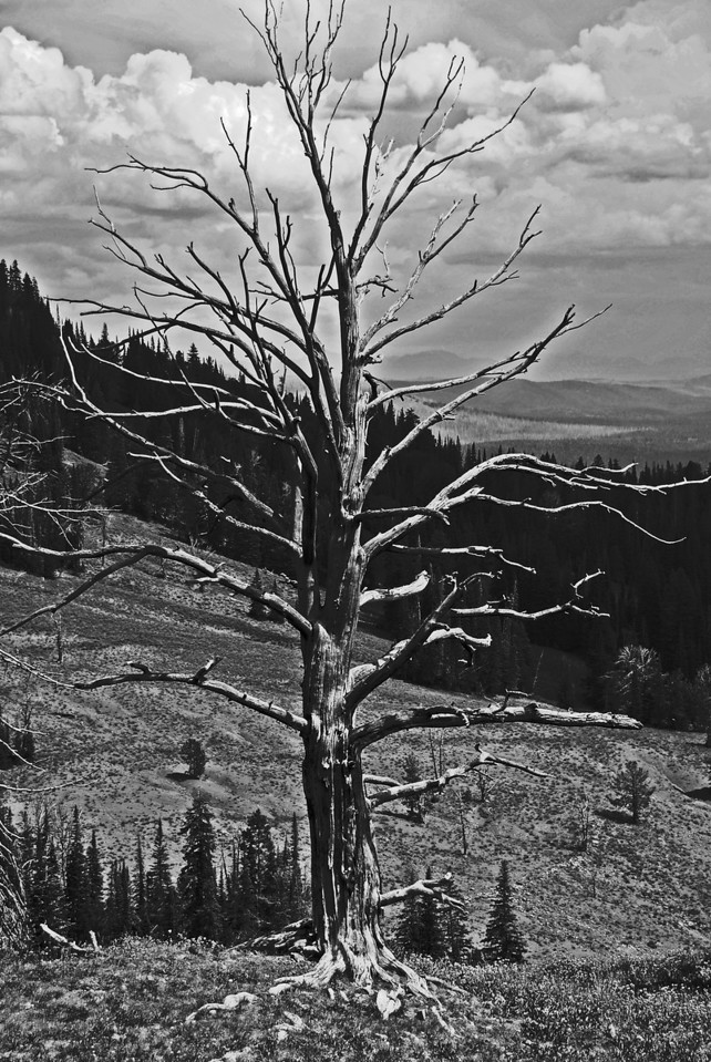 Before the Storm, Lamar Valley In Yellowstone National Park