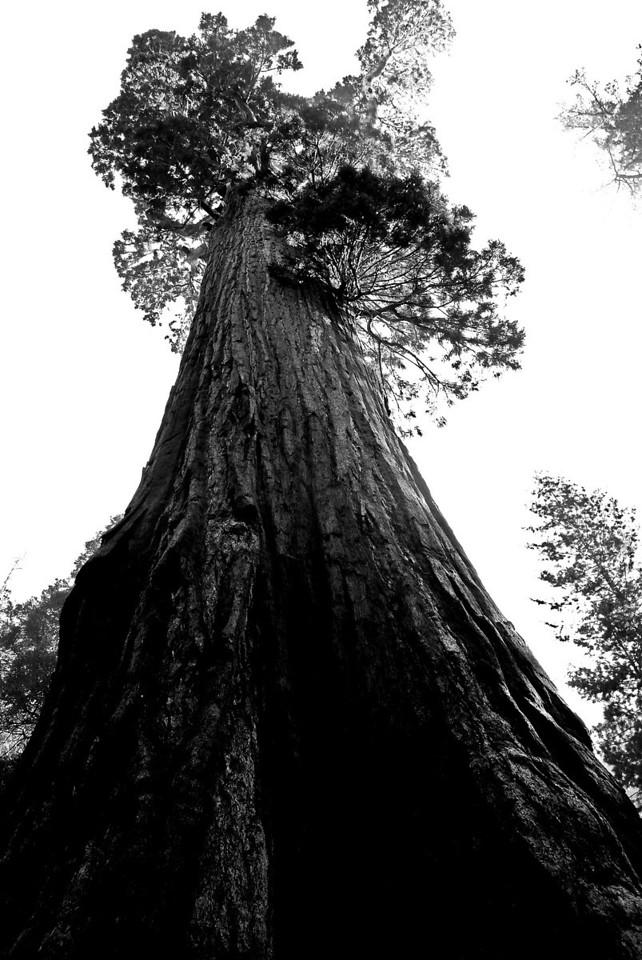 Massive, Sequoia National Park