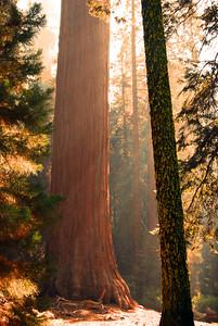 Let The Sun Shine,  Sequoia National Park