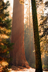 Let The Sun Shine,  Sequoia National Park