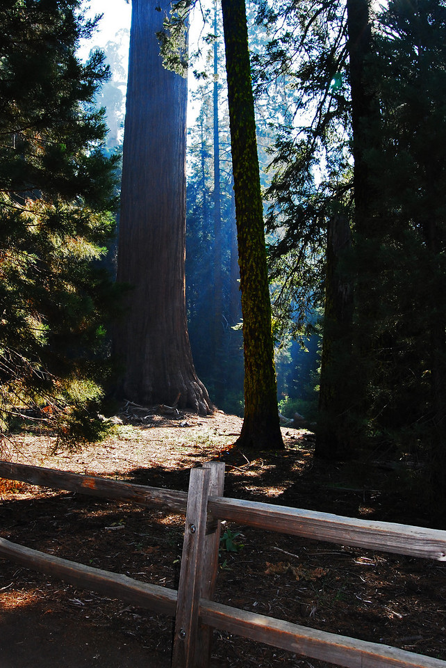 It Shines,  Sequoia National Park