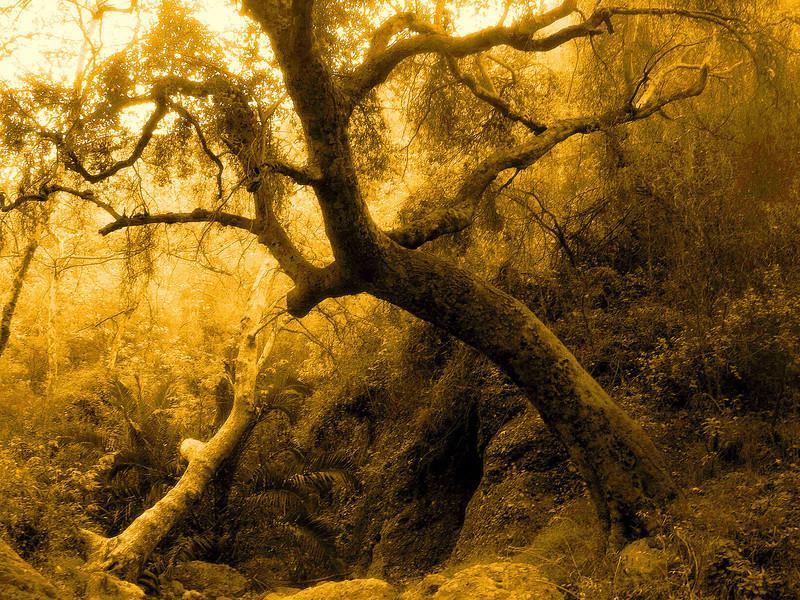 Temescal Canyon, Palisades, CA