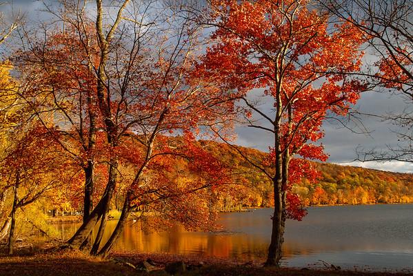 Glorious Trees Rockland Lake.
