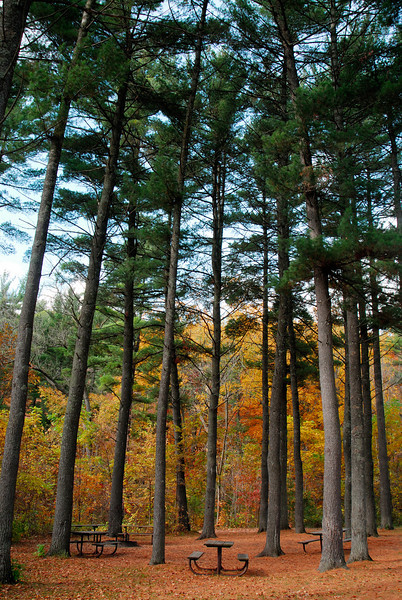 Interstate State Park - Trees - 03