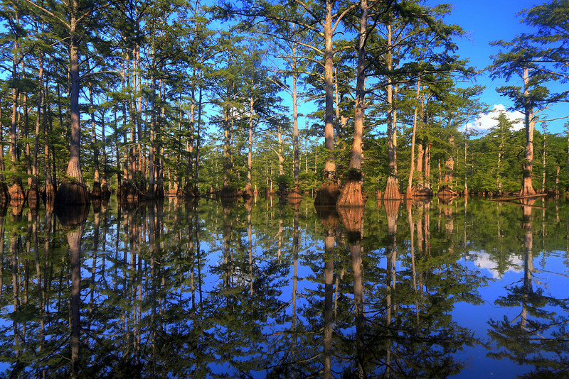 Bollie Pond, Henry Gray - Hurricane Lake WMA, Arkansas