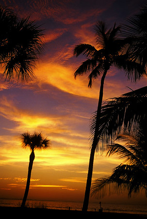 Sunrise behind palms with beach intense colors