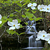 Little Dogwood Falls , East Prong, West Fork Point Remove Creek, Gulf Mountain WMA, Arkansas