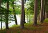 Savanna Portage State Park - Trees - 01