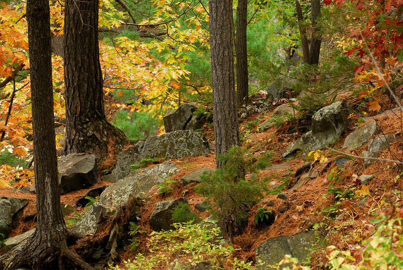 Interstate State Park - Trees - 01