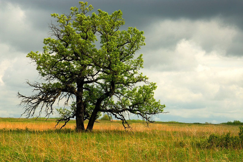 Buffalo River State Park - Lone Tree