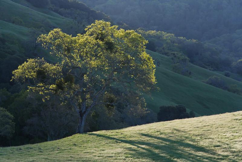 Sun kissed Golden Oaks.   Halls Valley