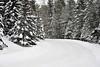 Winter road through Itasca State Park