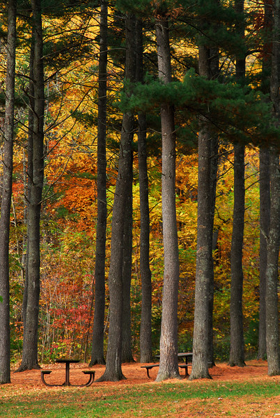 Interstate State Park - Trees - 02