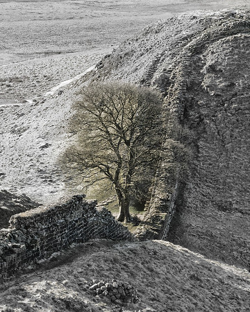 Cold Morning at Sycamore Gap Selective Color