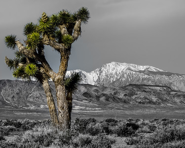 Joshua Tree and the  Sierras