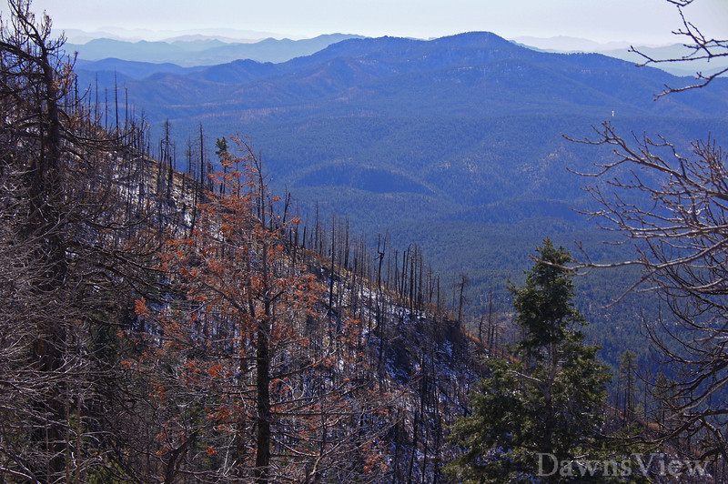 Apache-Sitgreaves National Forest-see the damage from the fire in summer of 2011