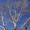 Aspen Tree at Hubbell Trading Post