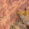 Canyon De Chelly, AZ, with Crows flying, notice the shadows