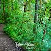 28  G Trail Through Woods