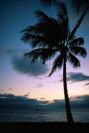 (A033) Evening on Maui - Hawaii