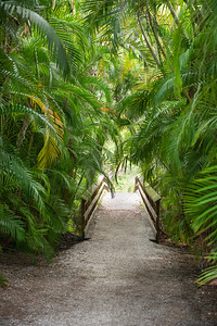 The Path to the Beach through tropical plants and palm trees