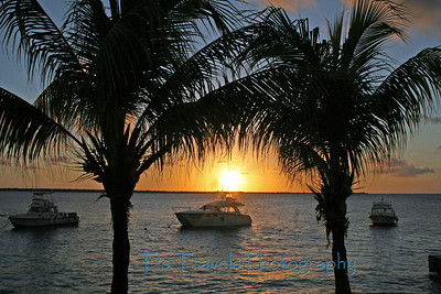 Sunset between the palms at Buddy's Dive Resort, Bonaire