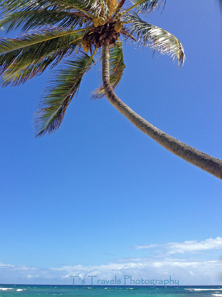 Palm on Pelican Cove, St. Croix '13