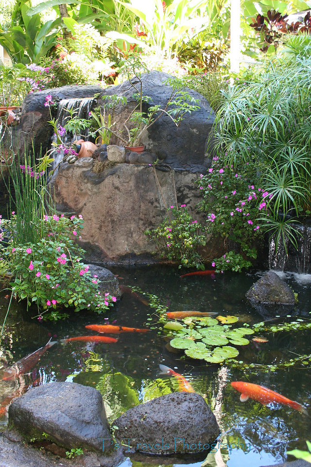 Koi Pond, Hawaii