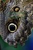 Butterfly3389
